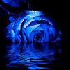 Blue_Rosey