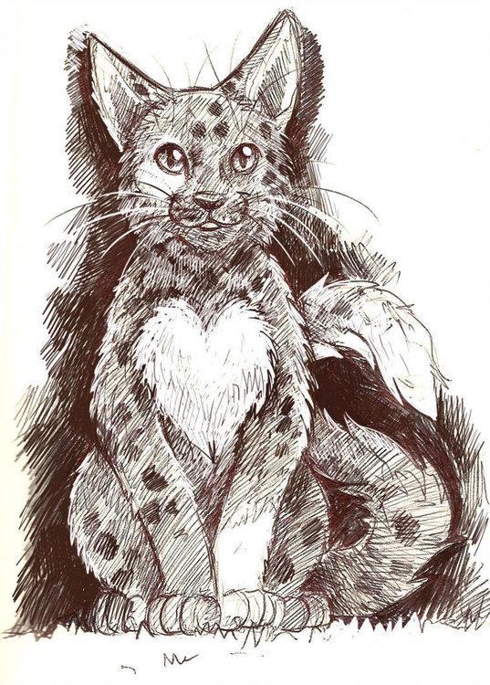 kitty_by_sheevee_d72vjig-pre.thumb.jpg.7ebf1f9d55f4aab8a84e9966109d44d0.jpg