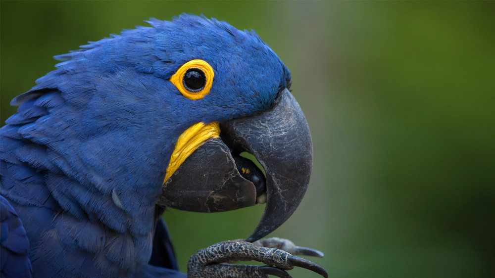 animals_hero_macaws copy.jpg