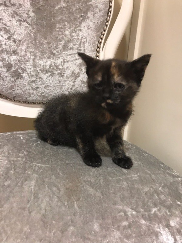 I'm Getting A Kitten! - Off Topic - Stray Fawn Community I'm getting a kitten! - Off Topic - Stray Fawn Community Kittens getting a kitten